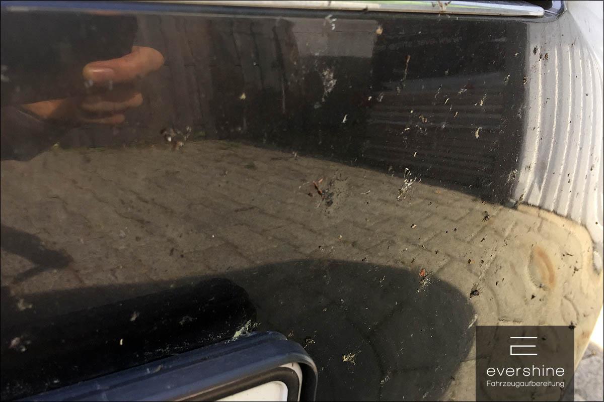 Eingebrannte Insektenreste auf dem Lack